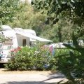 Flowered campsites at teh campground Beauséjour in the Mediterranean (...)